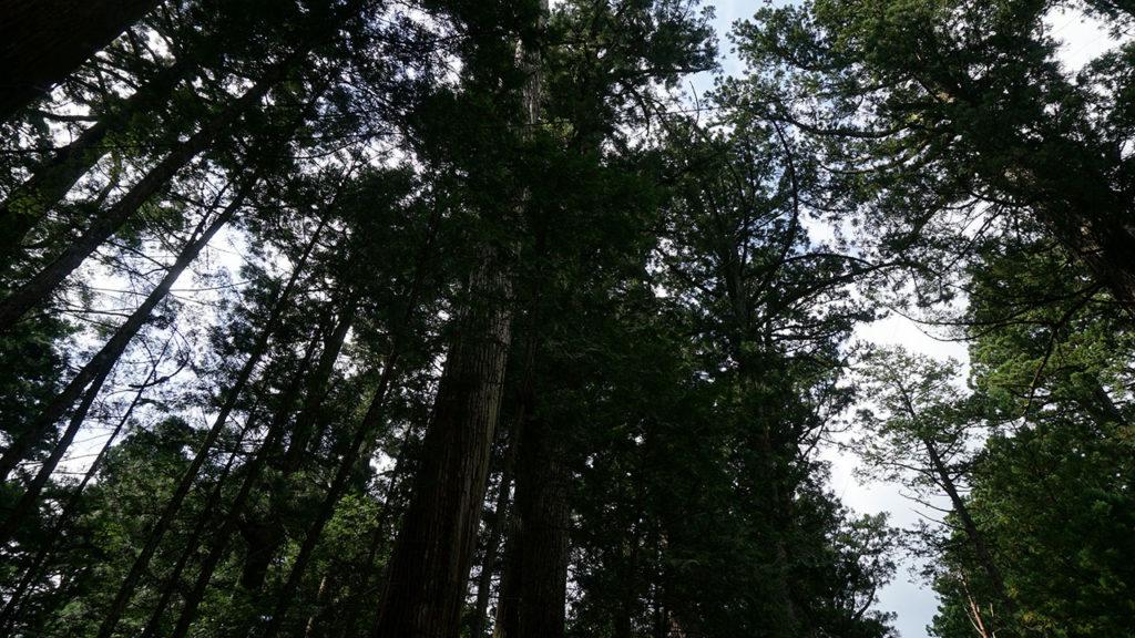 樹齢が長そうな大きな木々が伸びる