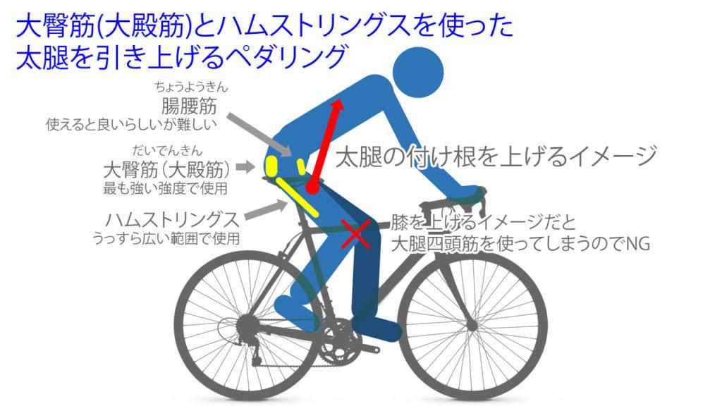 大臀筋(大殿筋)とハムストリングスを使った太腿を引き上げるペダリング
