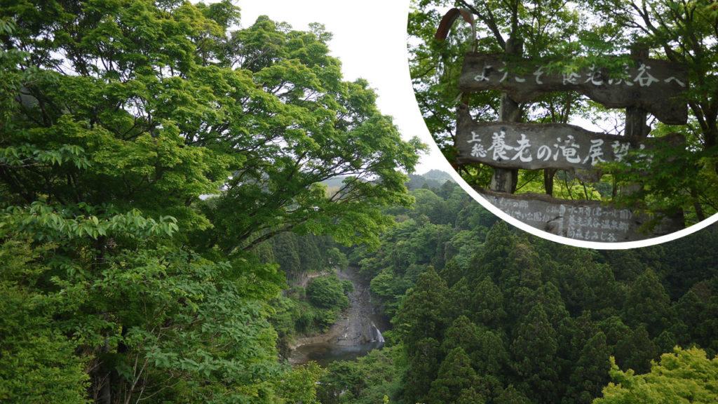ここが噂の養老の滝